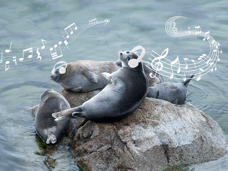"The Baikal Ringed Seal Has Changed: the Animal ""Hunts"" on Fishermen and Likes to Listen to Music"