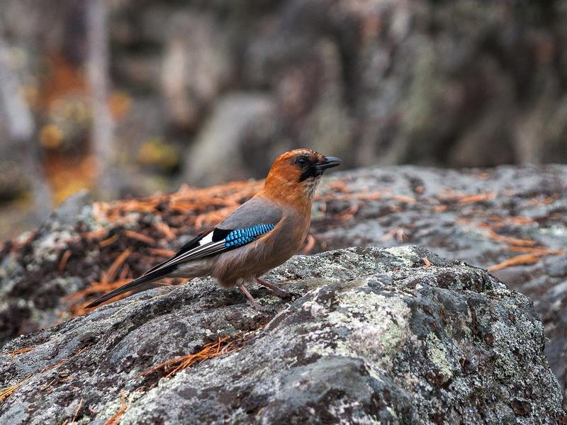 птицы на байкале список узи уже